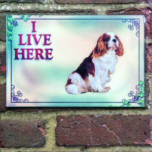 Dog Plaques